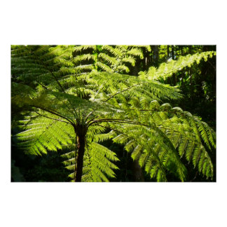 Tree Fern in the Rainforest Poster