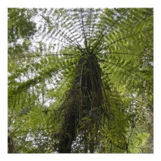 Tree Fern Custom Invite