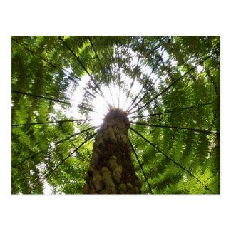 Tree Fern Postcard