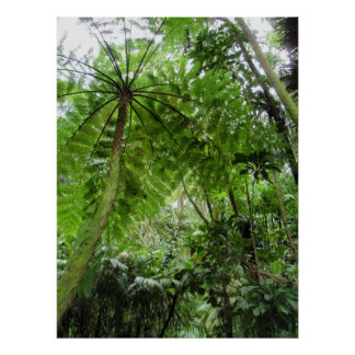 Tree Fern Poster