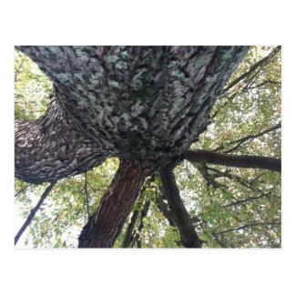 Tree Fortress Stamp Postcard