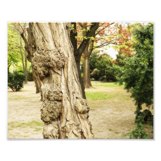 Tree free Form Photographic Print