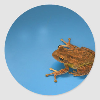 Tree frog against blue background on right stickers