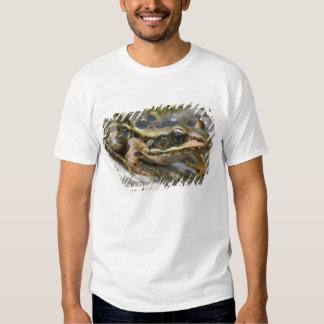 Tree frog at the entrance to small cave, t shirts
