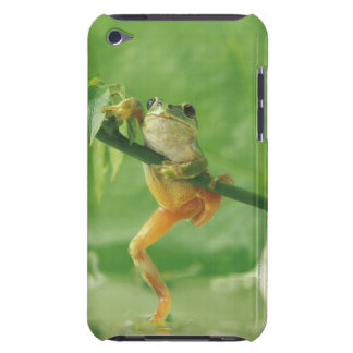 Tree Frog Barely There iPod Case