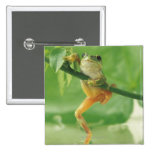 Tree Frog Button