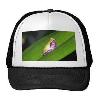 Tree Frog Trucker Hats