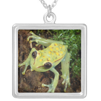 Tree Frog (Hylidae) Silver Plated Necklace