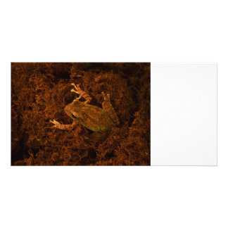tree frog in moss animal design photo cards