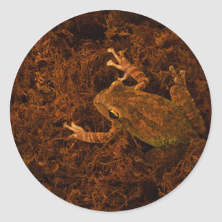 tree frog in moss animal design sticker