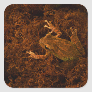 tree frog in moss animal design stickers