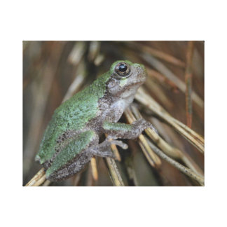 Tree Frog In The Pines Canvas Print