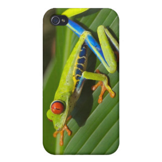 Tree Frog iPhone 4 Cover
