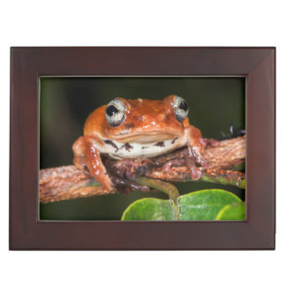 Tree frog, Lango Bai, Congo Keepsake Box
