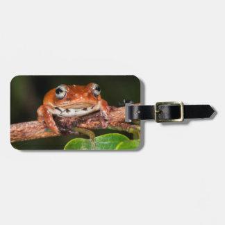 Tree frog, Lango Bai, Congo Luggage Tag