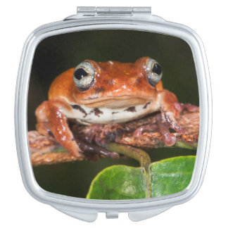 Tree frog, Lango Bai, Congo Makeup Mirrors