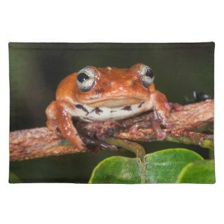Tree frog, Lango Bai, Congo Placemat
