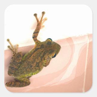 tree frog leg up stylized pink animal square sticker