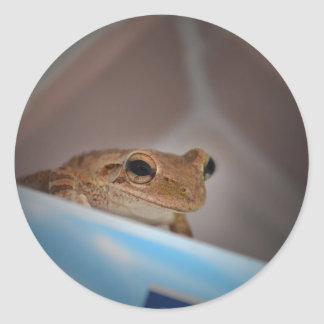 tree frog looking at viewer on blue round sticker