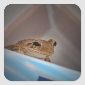 tree frog looking at viewer on blue square stickers