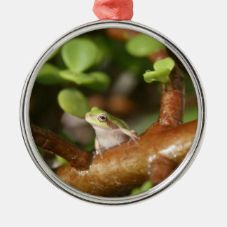 tree frog looking sideways in bonsai tree photo christmas tree ornaments