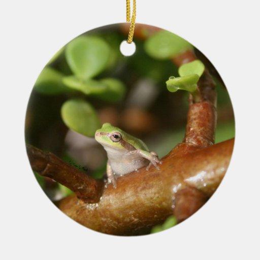 tree frog looking sideways in bonsai tree photo ornament