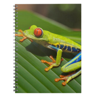Tree Frog Notebooks