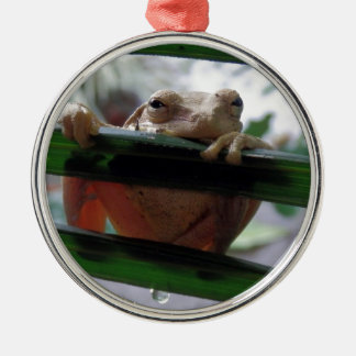 tree frog on a leaf christmas ornament