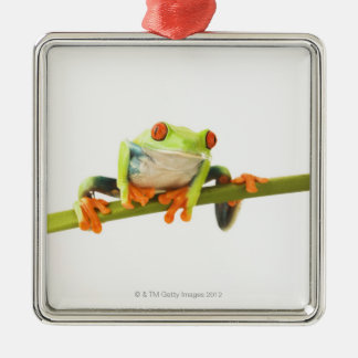 Tree frog on stem christmas ornament