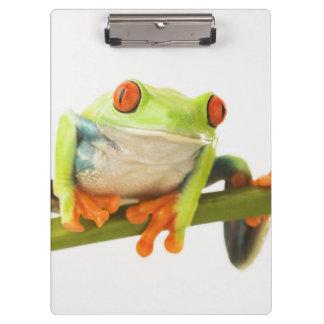Tree frog on stem clipboard