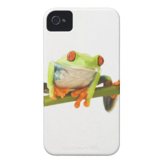 Tree frog on stem iPhone 4 case