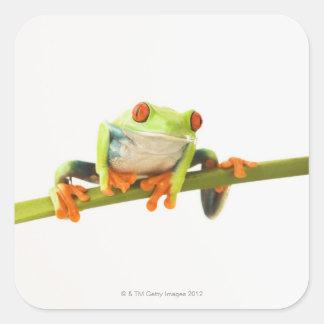 Tree frog on stem sticker