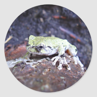 Tree Frog Round Sticker