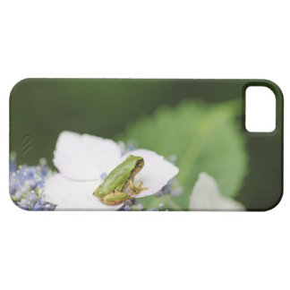Tree Frog Sitting on a Hydrangea Hyogo iPhone 5 Cases