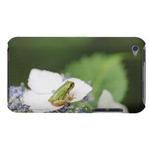 Tree Frog Sitting on a Hydrangea, Hyogo Barely There iPod Covers