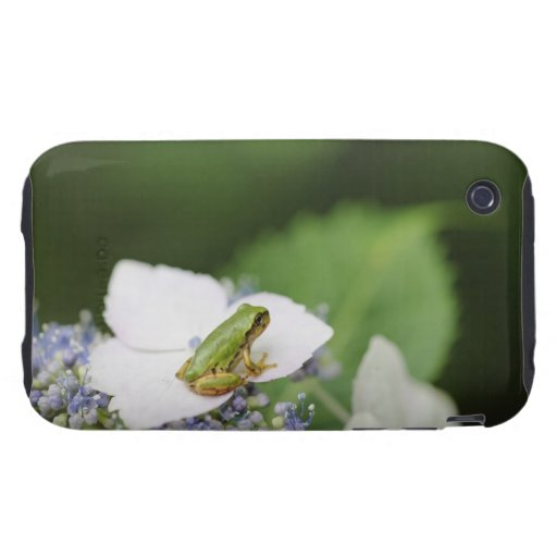 Tree Frog Sitting on a Hydrangea, Hyogo iPhone 3 Tough Cover