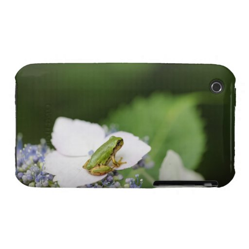 Tree Frog Sitting on a Hydrangea, Hyogo iPhone 3 Covers