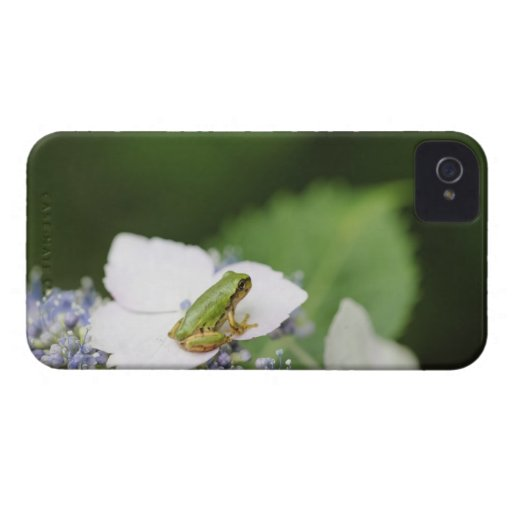 Tree Frog Sitting on a Hydrangea, Hyogo Case-Mate iPhone 4 Case