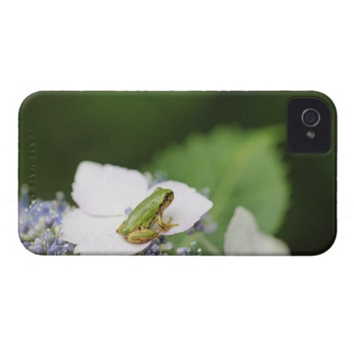 Tree Frog Sitting on a Hydrangea, Hyogo iPhone 4 Case-Mate Cases