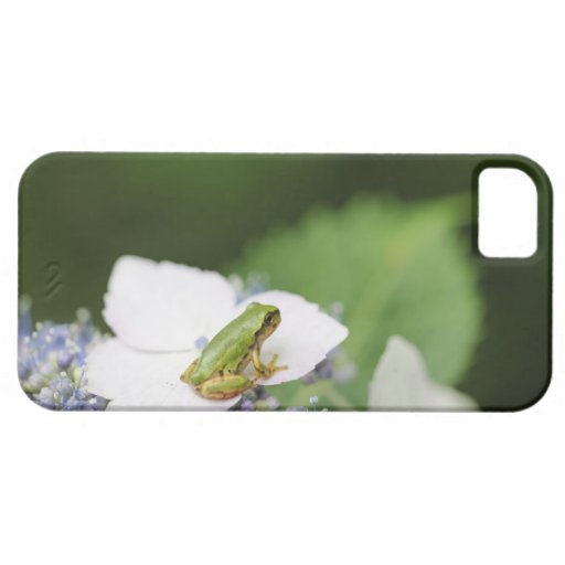 Tree Frog Sitting on a Hydrangea, Hyogo iPhone 5 Cover