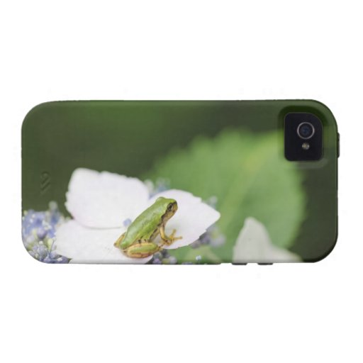 Tree Frog Sitting on a Hydrangea, Hyogo Case-Mate iPhone 4 Covers