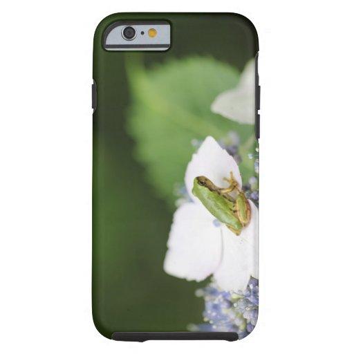 Tree Frog Sitting on a Hydrangea, Hyogo iPhone 6 Case