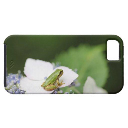 Tree Frog Sitting on a Hydrangea, Hyogo iPhone 5 Case