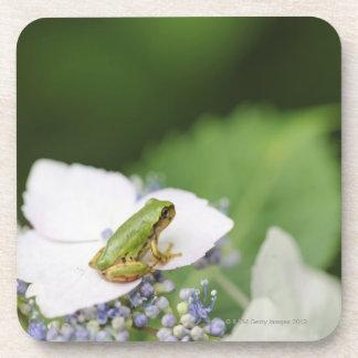 Tree Frog Sitting on a Hydrangea Hyogo Coasters