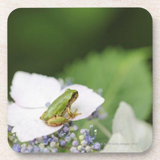 Tree Frog Sitting on a Hydrangea, Hyogo Coasters