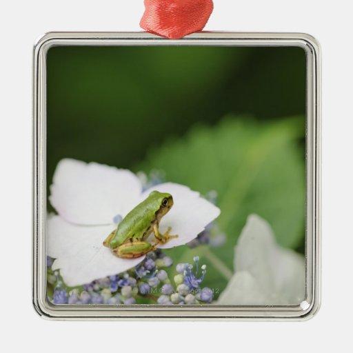 Tree Frog Sitting on a Hydrangea, Hyogo Christmas Ornaments