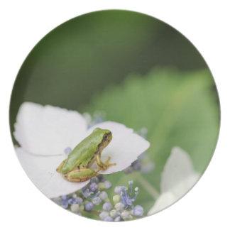 Tree Frog Sitting on a Hydrangea, Hyogo Dinner Plates