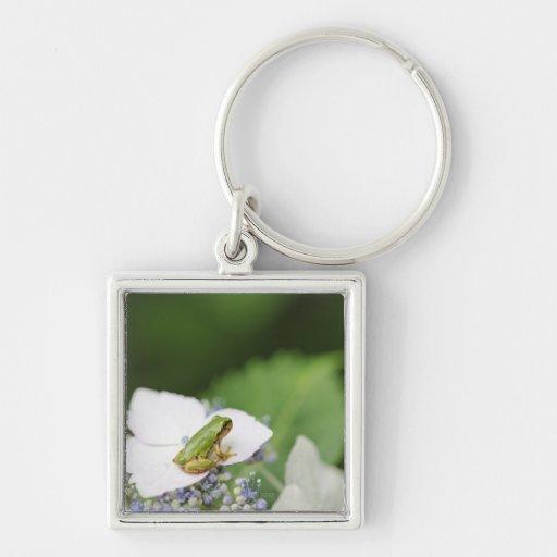 Tree Frog Sitting on a Hydrangea, Hyogo Key Chains