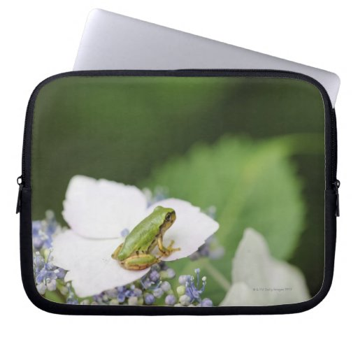 Tree Frog Sitting on a Hydrangea, Hyogo Laptop Computer Sleeves