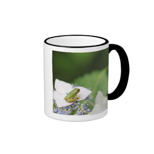 Tree Frog Sitting on a Hydrangea, Hyogo Coffee Mug